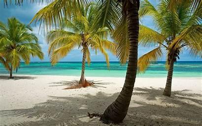Caribbean Palm Tropical Island Dominican Trees Republic