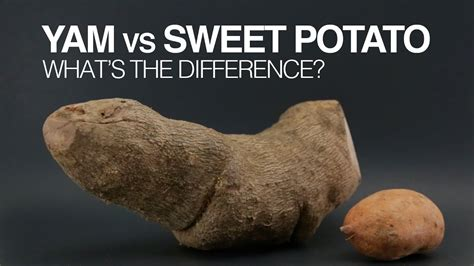 yams  sweet potatoes whats  difference youtube