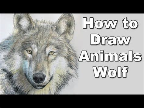 draw  wolf realistc animals drawing lesson step