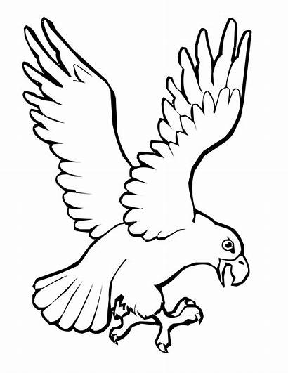 Bird Coloring Pages Parrot Wings Printable Turkey