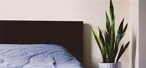 Welche Pflanzen Fürs Schlafzimmer : pflanzen im schlafzimmer so hast du einen gesunden schlaf ~ Frokenaadalensverden.com Haus und Dekorationen