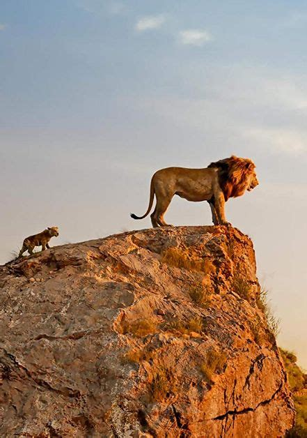 .segítségével és a videó címe tartalmazza: Az oroszlánkirály Teljes film magyarul online és letöltés 2019... Az oroszlánkirály online film ...