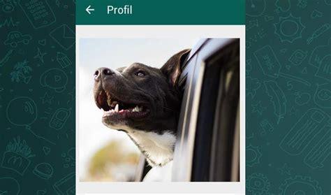 bildergalerie lustige profilbilder fuer whatsapp