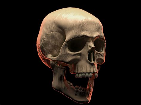 List of Synonyms and Antonyms of the Word: human skull