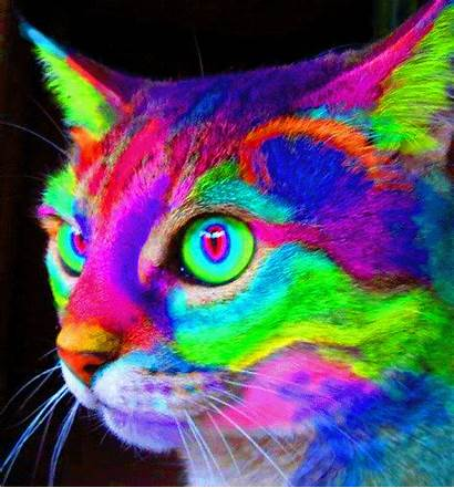 Trippy Psychedelic Gifs Cat Rainbow Neon Colorful