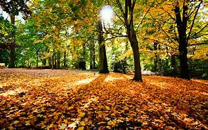 Wallpaper Weekends Fall Has Fell Autumn Wallpapers For The