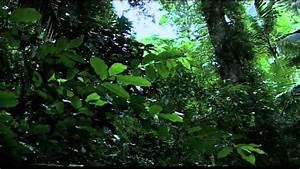 Rainforest Ecosystems | www.imgkid.com - The Image Kid Has It!