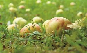 Apfelbaum Schneiden Sommer : apfelbaum schneiden garten rasenpflege ~ Lizthompson.info Haus und Dekorationen