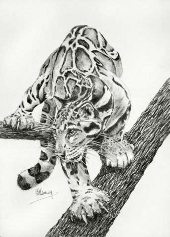 images  pinterest big cats wild animals