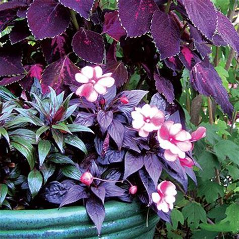 shaded flower 20 colorful plants for shade gardens