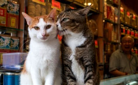 step   exotic world  hong kong shop cats catster