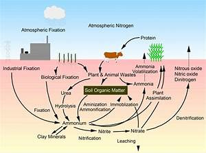 Diagram Of The Nitrogen Cycle In Nature