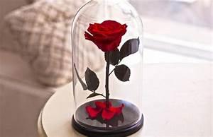 Rose In Glas : beauty and the beast rose forever rose enchanted rose belle rose rose in glass preserved ~ Frokenaadalensverden.com Haus und Dekorationen