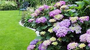 Hortensien überwintern Im Garten : video hortensien richtig schneiden mein sch ner garten ~ Frokenaadalensverden.com Haus und Dekorationen
