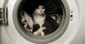 Laver Un Chaton : un homme condamn pour avoir tu son chaton dans le lave linge ~ Nature-et-papiers.com Idées de Décoration