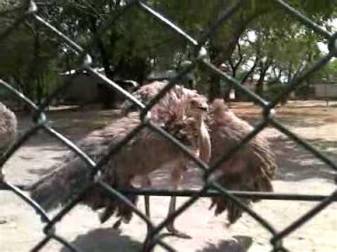 islamabad zoo youtube