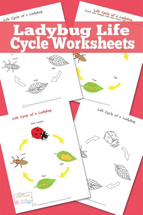 ladybug life cycle worksheet itsy bitsy fun