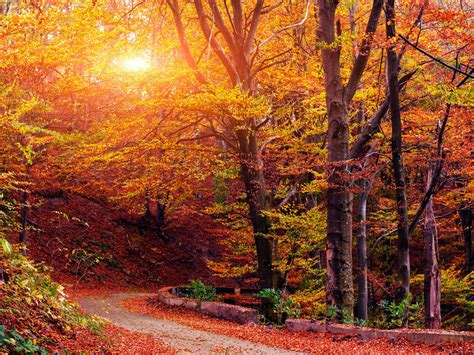 Autumn Images Autumn Serenade The Fall Puzzler All Songs