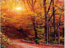 Autumn Serenade The Fall Music Puzzler All Songs