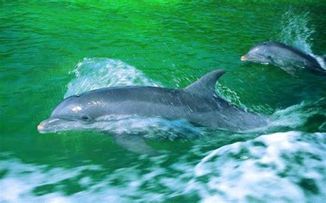 beautiful dolphins photography top design magazine web