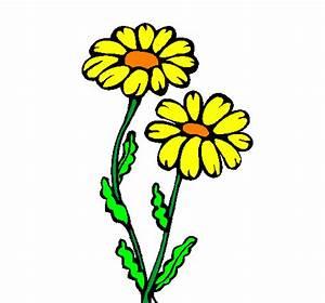 Desenho de Margaridas pintado e colorido por Usuário não