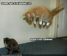 Funny Cat Pictures with Captions Com