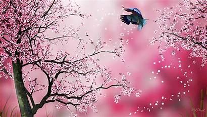 Sakura 1080 1920 Wallpapers