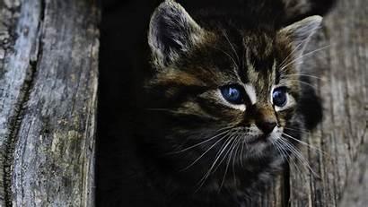 4k Pc Wallpapers Cat