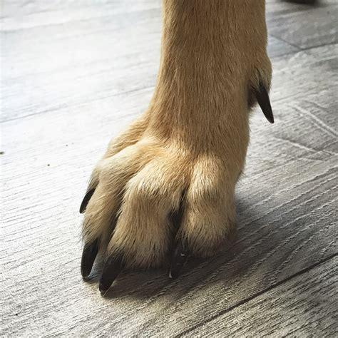 ilovemydog comment cest fait des pattes de chien