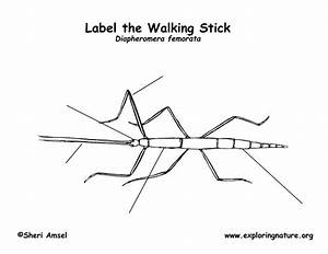 Walkingstick Labeling Page