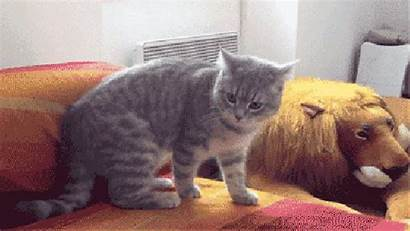 Cat Gifs Roll Tuck December Buzzfeed Escapes