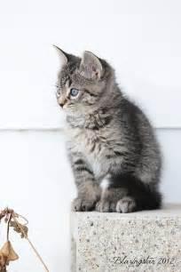 Little Gray Kitty Cat Baby