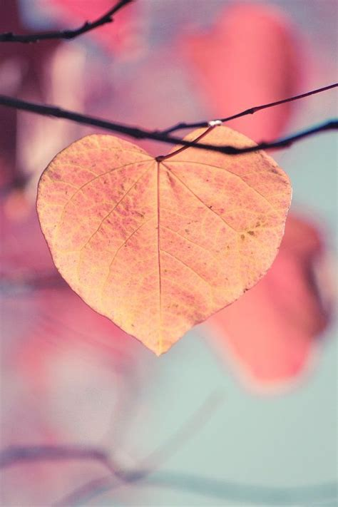 Autumn Fall Gold Wallpaper Iphone by Autumn Photograph Shaped Leaf Orange Gold For My