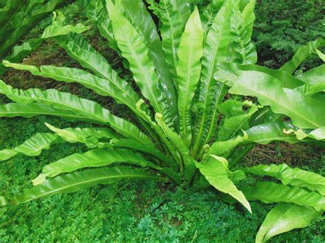 jenis tanaman hias cantik dijumpai