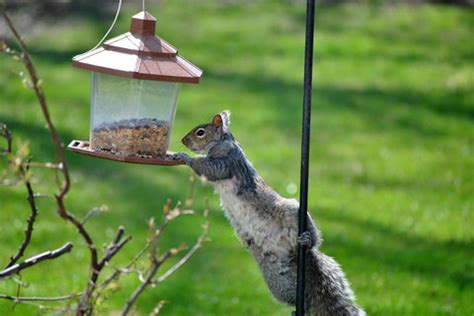 how to keep squirrels out of bird feeders simple
