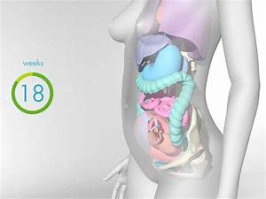 How Your Body Changes In Pregnancy  Video