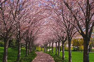 15, Best, Things, To, Do, In, Burlington, Ontario, Canada