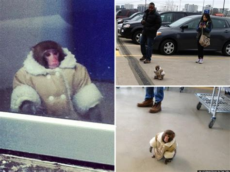 Ikea Tiny Monkey In A Coat And Nappy Takes Twitter By