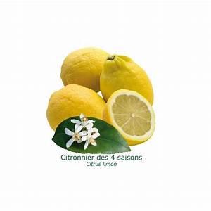 Achat Citronnier 4 Saisons : citronnier 4 saisons ~ Premium-room.com Idées de Décoration