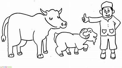 Gambar Mewarnai Sapi Idul Untuk Adha Kartun