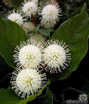 wit blad rode rand witte bloemen vijver 25 beste idee 235 n over witte bloemen op pinterest bloemen