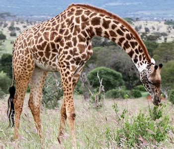 Best Safaris In Kenya Safari Tours Kenya Safari