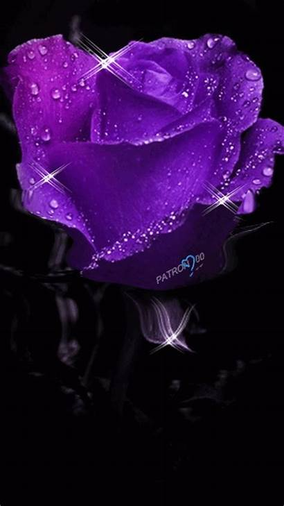 Purple Rose Trippy Mobile Wallpapers Animated Gifs