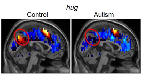 brain representations  social thoughts accurately