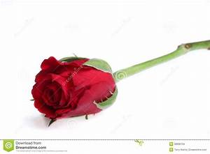 Single Red Rose Stock Photo - Image: 38936734