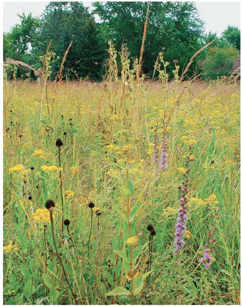 What Are Native Plants And Why Should We Use Them