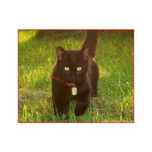 gps tracker for cats cat gps tracker reviews and recommendations