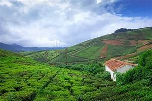 Coorg Trip From Bangalore A Guide For Your Next Getaway