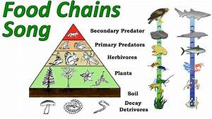 Food Chains  Mr W U0026 39 S Trophic Levels And Pyramid Of Energy