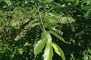 Baum Mit Weißen Blüten : hecken und str ucher jungj ger de ~ Michelbontemps.com Haus und Dekorationen